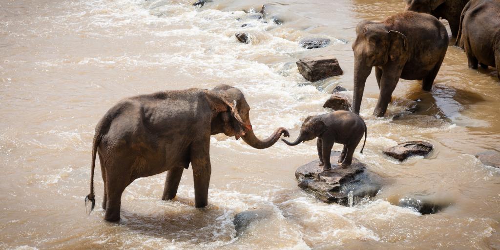 wild moms elephants