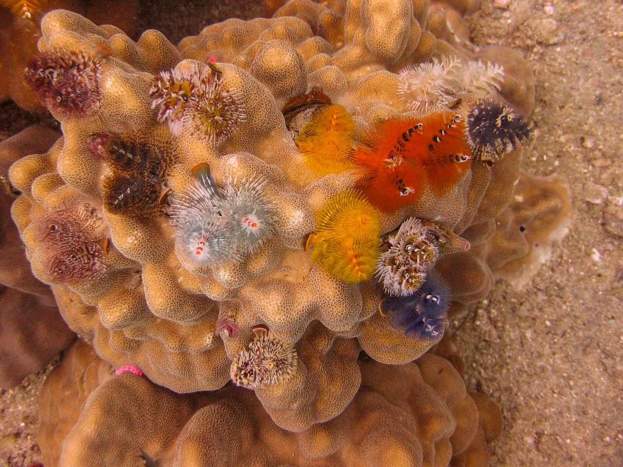 Happy Holidays: 5 Facts About Christmas Tree Worms - Dr. Carin Bondar